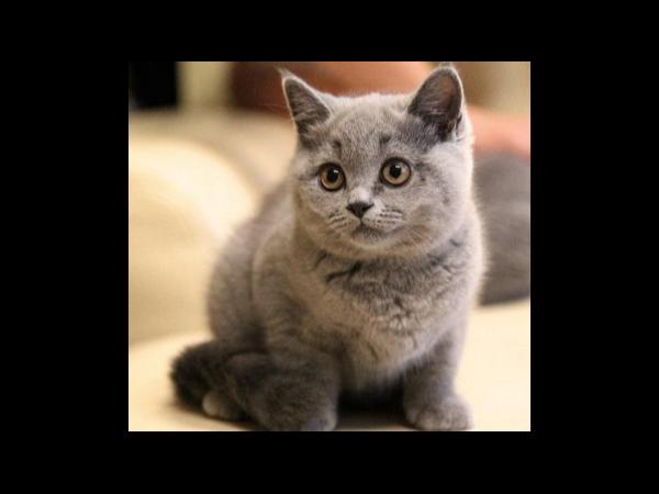 猫身上聚集了大量静电?没事,聚力教你如何消除静电